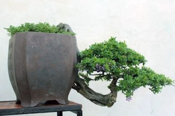 Brilliant Bonsai Plant Design Ideas For Garden11