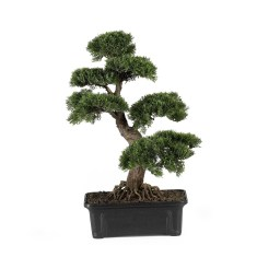 Brilliant Bonsai Plant Design Ideas For Garden12