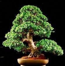 Brilliant Bonsai Plant Design Ideas For Garden24