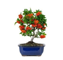Brilliant Bonsai Plant Design Ideas For Garden25