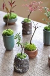 Brilliant Bonsai Plant Design Ideas For Garden27