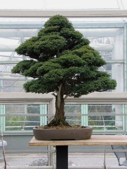 Brilliant Bonsai Plant Design Ideas For Garden31