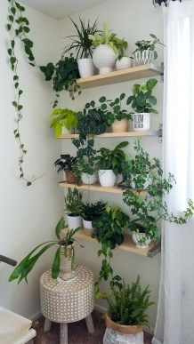 Simple Wall Plants Decorating Ideas23