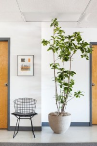 Simple Wall Plants Decorating Ideas36
