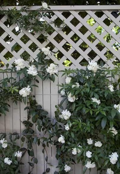 Awesome Small Garden Fence Ideas04