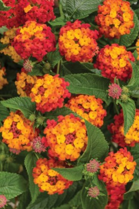 Extraordinary Summer Garden Ideas Just For You 24