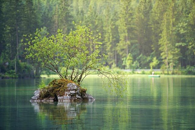 Los bosques importantes para la vida en la Tierra