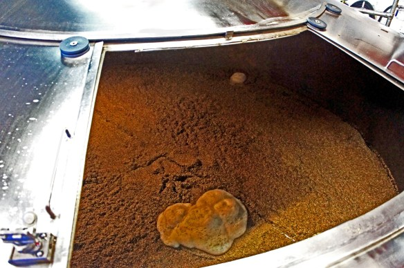 Inside the drained mash tun, with the grains still waiting to be removed