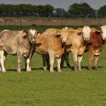Dobre perspektywy globalnego popytu na mięso