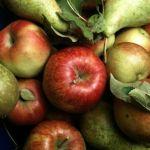 Uruchomienie eksportu owoców do USA