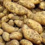 Wsparcie finansowe dla producentów ziemniaków