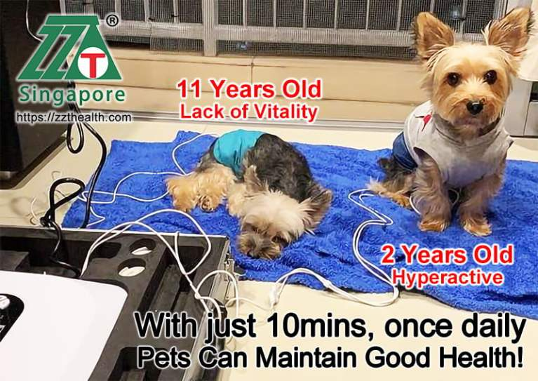 pets-maintain-health