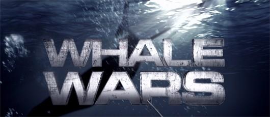 whale-mnn_1